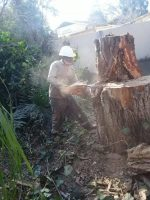 Amos & Muzi Tree Felling and Gardern services
