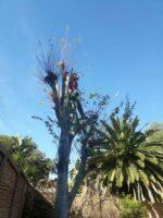 Proud Tree fellers