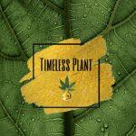 Timeless Plant – FECO Oils